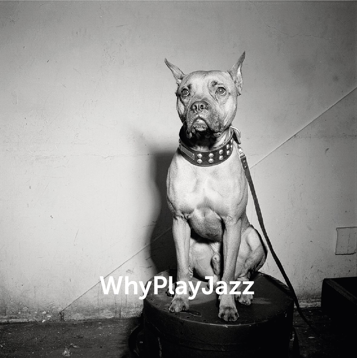 WhyPlayJazz mascot posing for the camera.